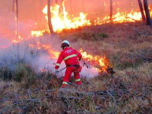 incendio bosco-2